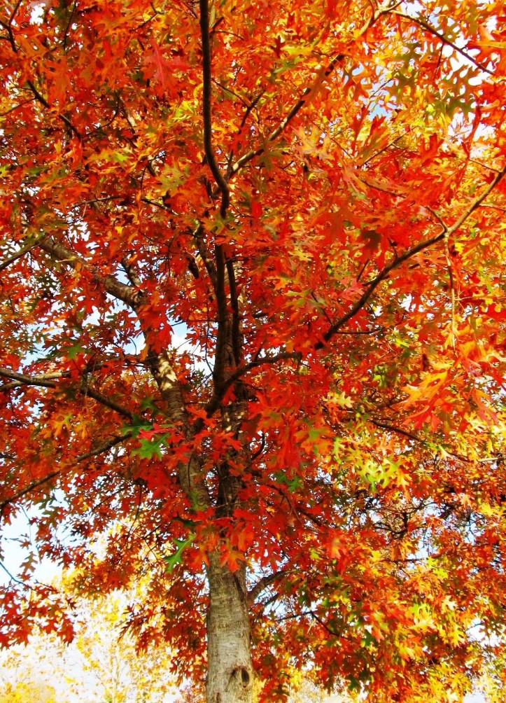 beautiful-fall-foliage-20111.jpg