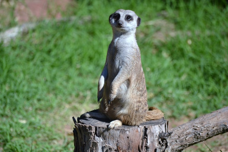 Day at the zoo 023
