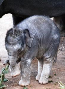 Baby Achara click Image To Enlarge