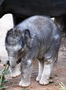 Baby Achara click Image To Enlarge