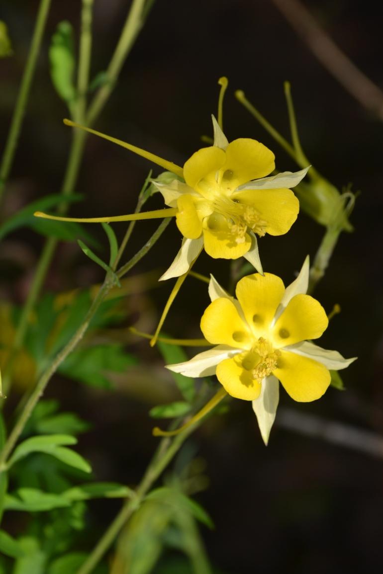Eddie's yellow flower