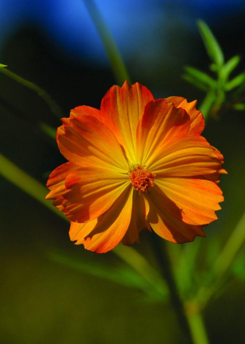 Flower of the day[828997].jpg