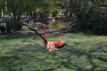 Flamingo on the run!