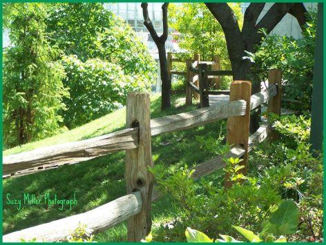 Old Botanical Gardens Fence.